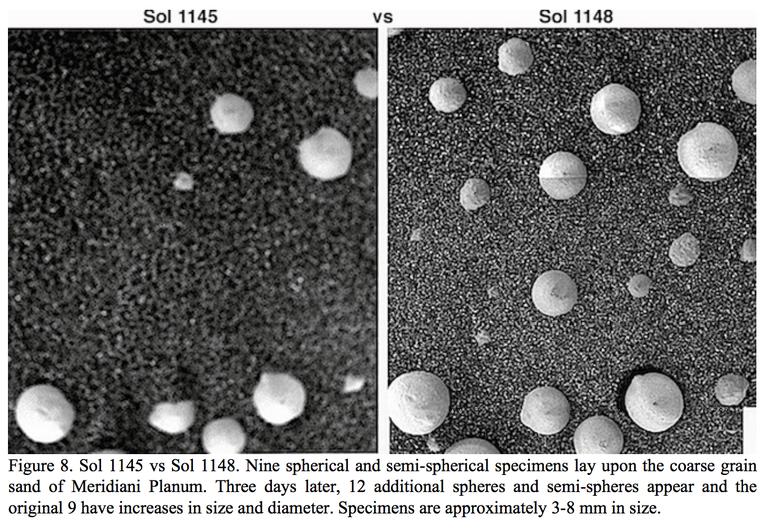 Nấm mọc trên sao Hỏa: Bằng chứng về sự sống có thật? - nam 2